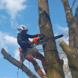 Baumabtragung Baum-Faellen