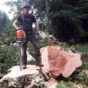 Baumabtragung Baum-FaellenBaumabtragung Baum-Faellen