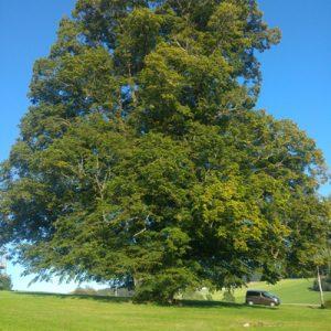 Baumkontrolle-und-Begutachtung