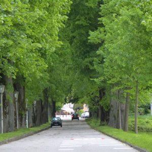 Baumpflege Lichtraum Profilschnitt