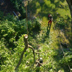 Baumabtragung Rigging
