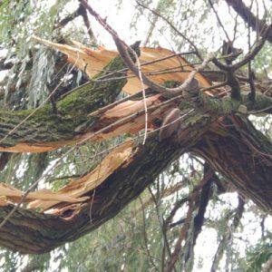 Baumsanierung Sturmschaden