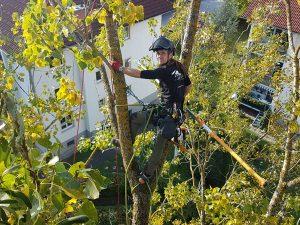 Arbeitsweise Treetastic Seilklettertechnik Baum