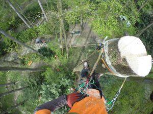 Arbeitsweise Seilklettertechnik Baum